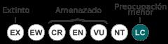 Status Faisán Dorado (Chrysolophus pictus)